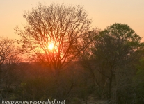 Zimbabwe elephant ride sunset-1